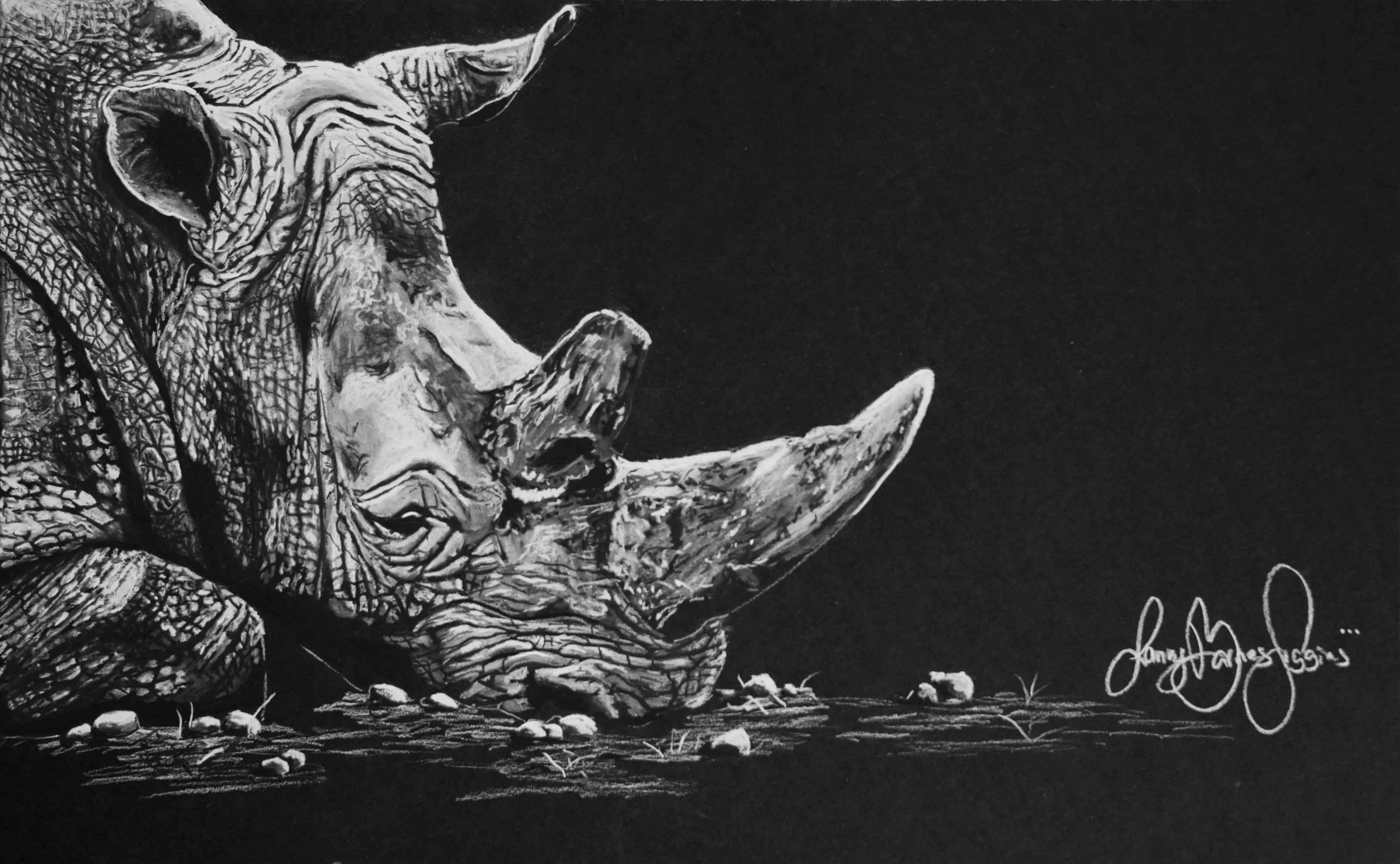 Big 5 Rhino